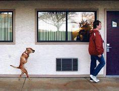 Faith,the two legged dog