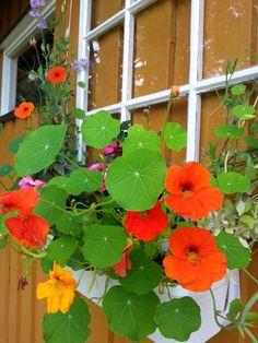 Blomkarse Planters, Pictures, Plant, Window Boxes, Pot Holders, Flower Planters, Pots