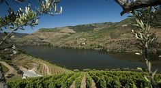 Quinta do Seixo   Wine Tasting in Douro