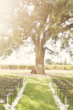 Gorgeous ceremony space overlooking a vineyard. So pretty! I want a big tree at my wedding.