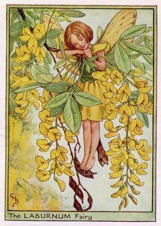 Laburnum Flower Fairy Vintage Print, c.1950 Cicely Mary Barker Book Plate Illustration