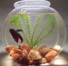I love putting these fish bowls together betta fish for How to clean a betta fish bowl