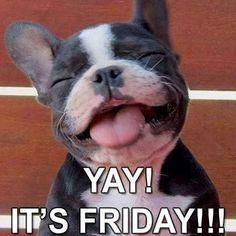 Friday Movie Meme, Friday Dog, Funny Friday Memes, Funny Memes, Hello Friday, Funny Quotes, Happy Friday Humour, Happy Friday Dance, Happy Friday Quotes