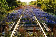 Abandoned railroad. Nature strikes back... wish i knew of a place like this near me for my engagement pics