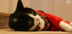 Community Post: 26 Pictures Of Cats & Dogs In Christmas Sweaters
