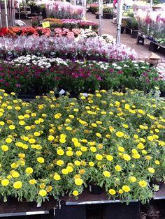 Flores em Oslo