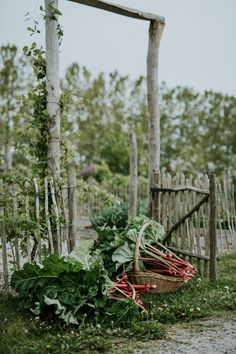 Learning to manage stress and depression by gardening with nature, living mindfully, and eating seasonally on a small farm on Ærø island in Denmark Forest Garden, Gnome Garden, Edible Garden, Vegetable Garden, Permaculture, Farmhouse Garden, Grow Organic, Flower Farm, Slow Living