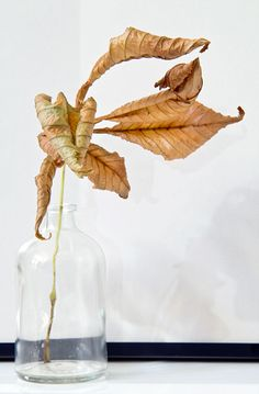 Dried leaf from Musta Ovi Nothing But Flowers, Leaves Of Grass, Autumn, Fall, Decoration, Old Houses, Devil, About Me Blog, Seasons