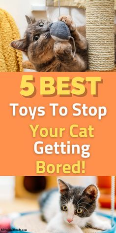 Funny Dog Toys, Cute Dog Toys, Diy Dog Toys, Best Dog Toys, Best Kitten Toys, Cool Cat Toys, Toys For Cats, Cool Cats, Kittens Cutest Baby