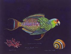 James Prosek, Parrotfish Nocturne, 2012, watercolor, gouache, colored pencil, and graphite on paper, courtesy of the artist and Waqas Wajahat, New York