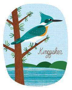 Lisa DeJohn - Kingfisher