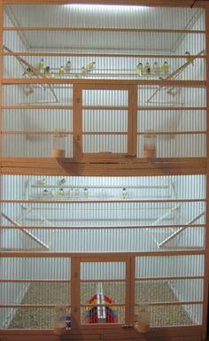Размеры отделения где-то 120х100х100 Лампа люминесцентная 13Вт Обычный наполнитель для кошачего туалета. Разнообразие производителей огромное. Разница разве что в наличии ароматизаторов в наполнителе. Замена по мере загрязнения. Точные сроки назвать нельзя, так как в разных боксах живет разное количество птиц. Если Вы хотите чтобы не было мусора, то садите птиц в аквариум. :-) Так как клетки делаю сам, то и проект разрабатываю я. Естественно основываясь на своих наблюдениях. В первую очередь…