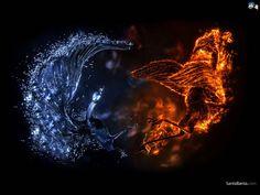 Water vs. fire birds