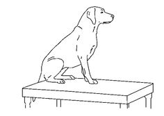 labrador retriever coloring pages google haku