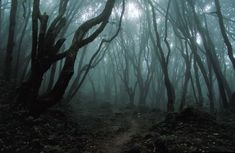 Top 10 Aokigahara Forest Stories about the Haunted Forest in Japan – Mysterious Monsters Cthulhu, Haunted Woods, Haunted Forest, Magical Forest, Haunted Houses, Forest Tumblr, Hoia Baciu Forest, Scary Woods, Haunted Places