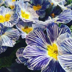 Way to go! /よくやったいいぞおめでとう  こんにちはトムだよお昼ご飯を買いに行くときに花屋さんでとってもかわいい花をみつけたよ  今日はnice jobやgood for you! と同じ意味で使えるフレーズを紹介するね誰かを褒めるときにバッチリつかえるよ  #勉強 #大人の勉強垢 #eigo #eikaiwa #english #勉強垢さんとつながりたい #英語 #英語の勉強 #大人の勉強垢 #中国語 #フランス語 #英検 #flower #flowers #cute by tom.flamingo