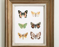 Moth art Print/ Butterfly / Watercolor / Gifts for her / Home Decor / Gift for mom / Farm Decor/ Farmhouse art/ house warming gift/ 8.5 x 11