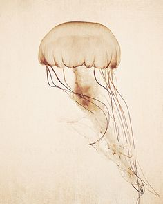 Jellyfsh Photography - nature art print, jellyfish print - neutral home decor, wall art, nature photography, wall decor, sepia, sea monster on Etsy, $30.00.  For the bathroom?