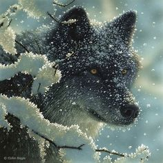 Beautiful Wildlife Paintings by Collin Bogle