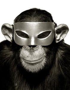 Albert Watson  MonkeySeries