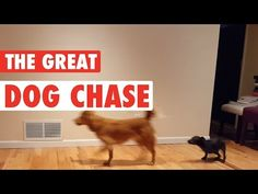 The Great Dog Chase - YouTube