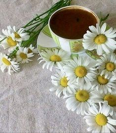 Daisy Love, Love Rose, Sweet Coffee, Tea And Books, Coffee Pictures, Good Morning Wishes, Coffee Break, Tea Pots, Coffee Lovers