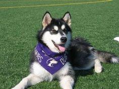 UW Huskies! GO DAWGS!