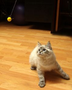 Info on the best pet friendly flooring.