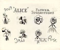 Vintage Disney Alice in Wonderland: Animation Model Sheet - Flower Suggestions for Iris & the White Rose Disney Tattoos, Studio Ghibli, Dreamworks, Alice In Wonderland Flowers, Disneyland, Disney Sketches, Drawing Disney, Disney Drawings, Disney Concept Art