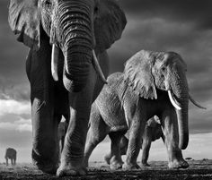 Stunning Wildlife photography!  Picture by David Yarrow