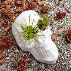 Make a bold statement in your home with our Skull Island Planter. Whether you're decorating for a seasonal party or looking for a quirky addition to your décor, this guy is dying to be on your shelf.  Find the Skull Island Planter, as seen in the Colorful Casita Collection at http://dotandbo.com/collections/colorful-casita?utm_source=pinterest&utm_medium=organic&db_sku=91880