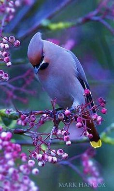 Beautiful Creatures, Animals Beautiful, Cute Animals, Cute Birds, Pretty Birds, Exotic Birds, Colorful Birds, Tropical Birds, Most Beautiful Birds