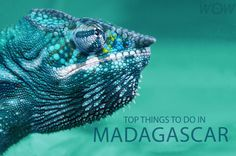 """The unique ecology of Madagascar has led some scientists to refer to the country as the """"eighth continent"""" of the world. WOW Travel shares with you its Top 8 Things To Do In Madagascar."""