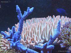 Tropical Freshwater Fish, Freshwater Aquarium Fish, Saltwater Aquarium, Underwater Theme, Underwater Life, Underwater Photos, Coral Reef Aquarium, Coral Reefs, Reef Tanks