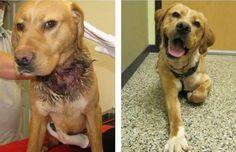Fotografías de perros adoptados. Antes y después.