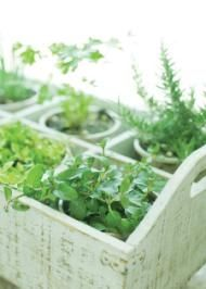 The best thing about growing herbs is they do not require a vast amount of space and there are endless ideas for growing them. Check out this boxed container - simple yet very effective.