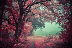 nature, tree, pink, red, photography, scenery,
