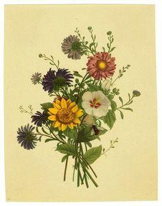 botanical antique prints bouquets sunflower - Google Search