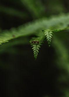 Ameise auf Farne