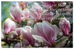 Mein Papa sagt...  Ein Freund ist ein Mensch, der die Melodie deines Herzen kennt und sie dir vorspielt, wenn du sie vergessen hast. Albert Einstein   #Zitate #deutsch #quotes      Weisheiten & Zitate TÄGLICH NEU auf www.MeinPapasagt.de