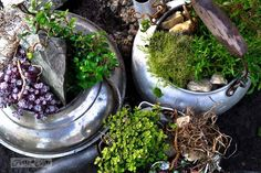 Old kettle rock garden - enhanced. Why just plant in soil and rocks if you can use kettles instead? :) via Funky Junk Interiors Funky Junk Interiors, Flower Planters, Garden Planters, Outdoor Planters, Container Flowers, Container Plants, Flower Pots, Planting Bulbs, Planting Flowers