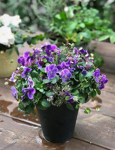 Blue Flower Arrangements, Blue Flowers, Plants, Plant, Planets