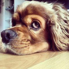 Dog's behaviour 'indicator' of elderly owner's health