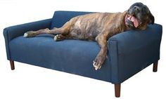 Mini couch dog bed for Rocky! From bigdogbeds.com