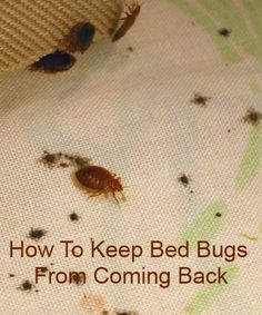 How to Keep Bed Bugs from Coming Back!