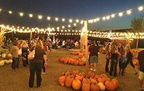 Hall's Pumpkin Farm and Corn Maze | Grapevine, Texas | Corn Maze | Hayrides | Pumpkin Patch | Parties