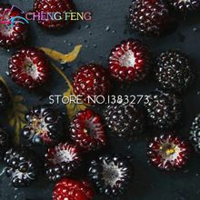 100pcs High Quality Rare Red Raspberry Seeds Fruit And Vegetable Semente For Home Garden Flowers Outdoor Sale Bonsai Semente(China (Mainland))