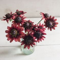 Browse our unique selection of award-winning Black-eyed-Susan (Rudbeckia) varieties. A reliable cut flower. Our Rudbeckia seeds are guaranteed. Black Flowers, All Flowers, Summer Flowers, Gloriosa Daisy, Cherry Brandy, Flower Names, Fall Wedding Flowers, Black Eyed Susan, Plant Sale
