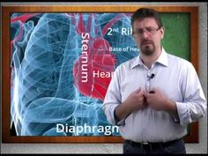 Ford's Anatomy & Physiology: Heart Fundamentals (video 1 of Cardiovascular System) Medical Careers, Medical Terminology, Medical School, Heart Function, High School Science, Circulatory System, Teaching Biology, Anatomy And Physiology, Homeschool