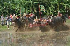 Bupati Artha Apresiasi Bangkitnya Makepung Lampit - http://denpostnews.com/2016/11/28/bupati-artha-apresiasi-bangkitnya-makepung-lampit/